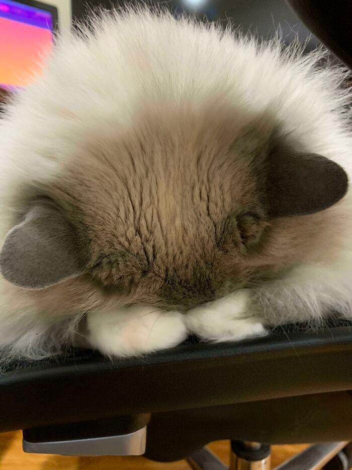 40 fotos de gatinhos dormindo 12