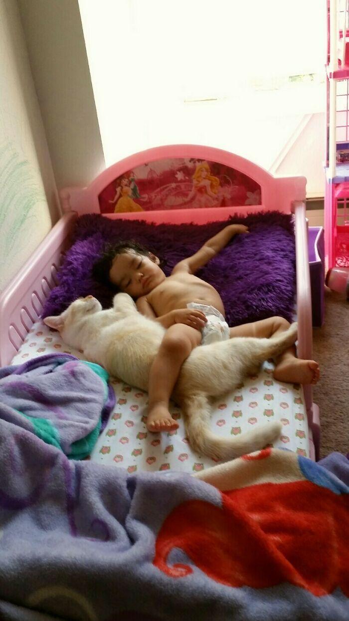 40 fotos de gatinhos dormindo 15