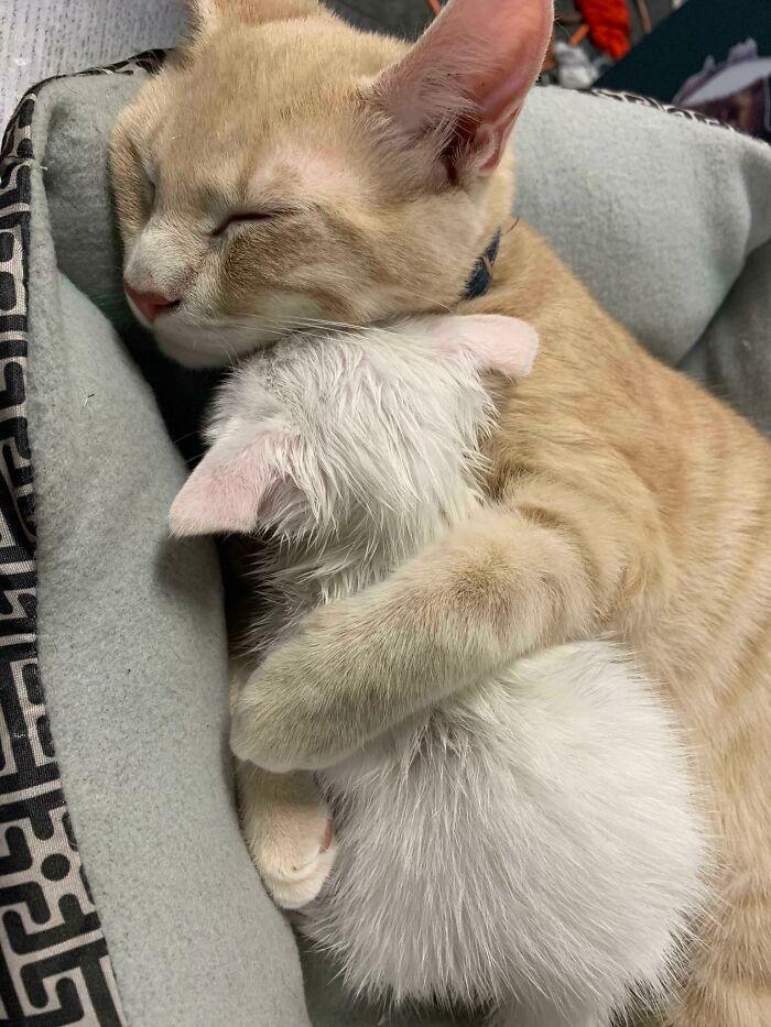 40 fotos de gatinhos dormindo 26