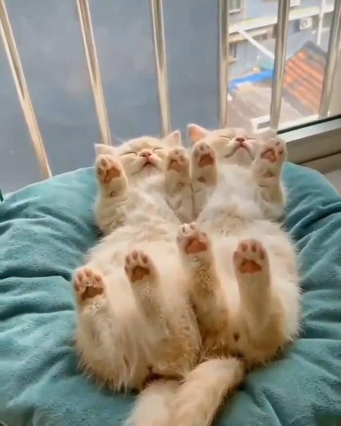 40 fotos de gatinhos dormindo 28