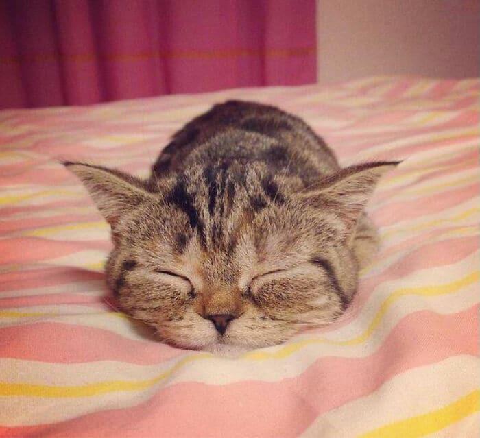 40 fotos de gatinhos dormindo 29