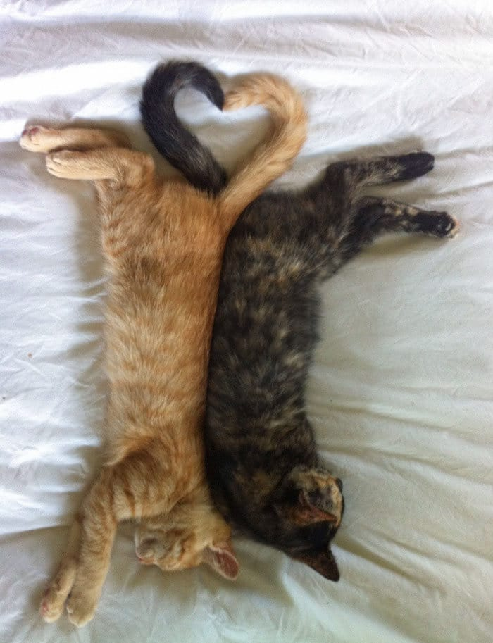 40 fotos de gatinhos dormindo 36
