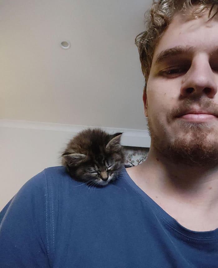 40 fotos de gatinhos dormindo 37