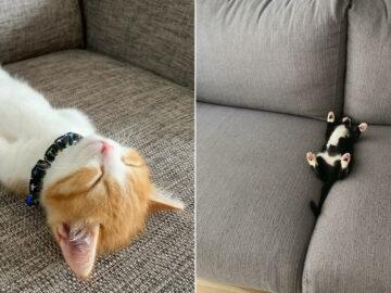 40 fotos de gatinhos dormindo 35