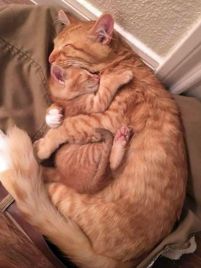 40 fotos de gatinhos dormindo 38