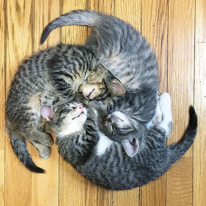 40 fotos de gatinhos dormindo 39