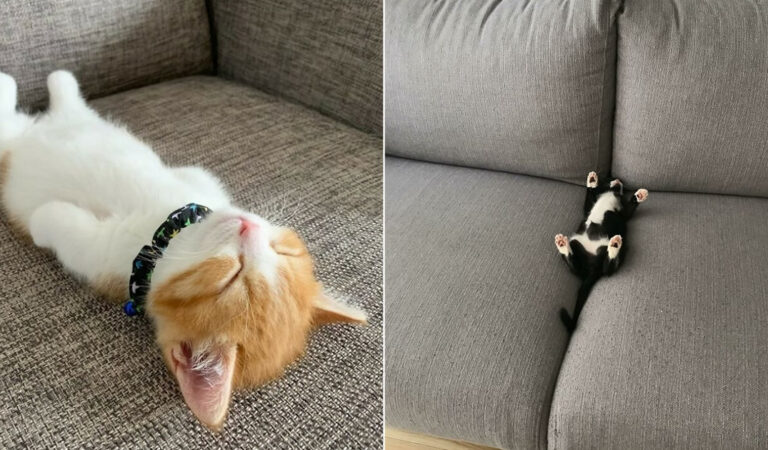 40 fotos de gatinhos dormindo 1