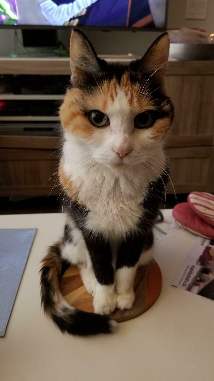 34 fotos de gatos supermodelos que certamente sabem fazer uma pose 2