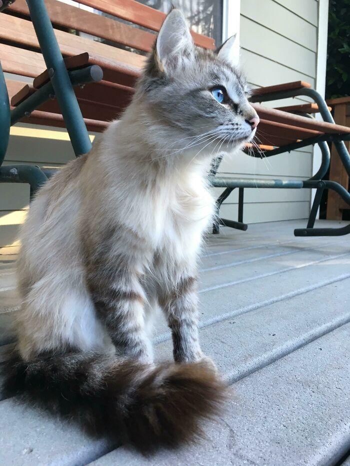 34 fotos de gatos supermodelos que certamente sabem fazer uma pose 3