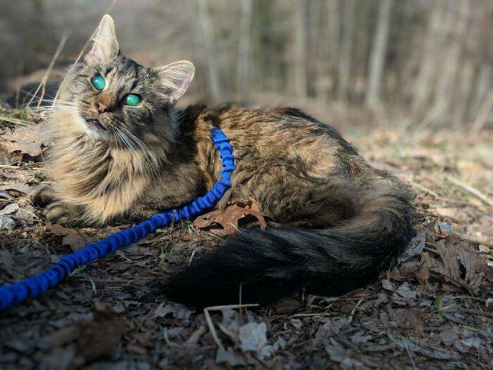 34 fotos de gatos supermodelos que certamente sabem fazer uma pose 4