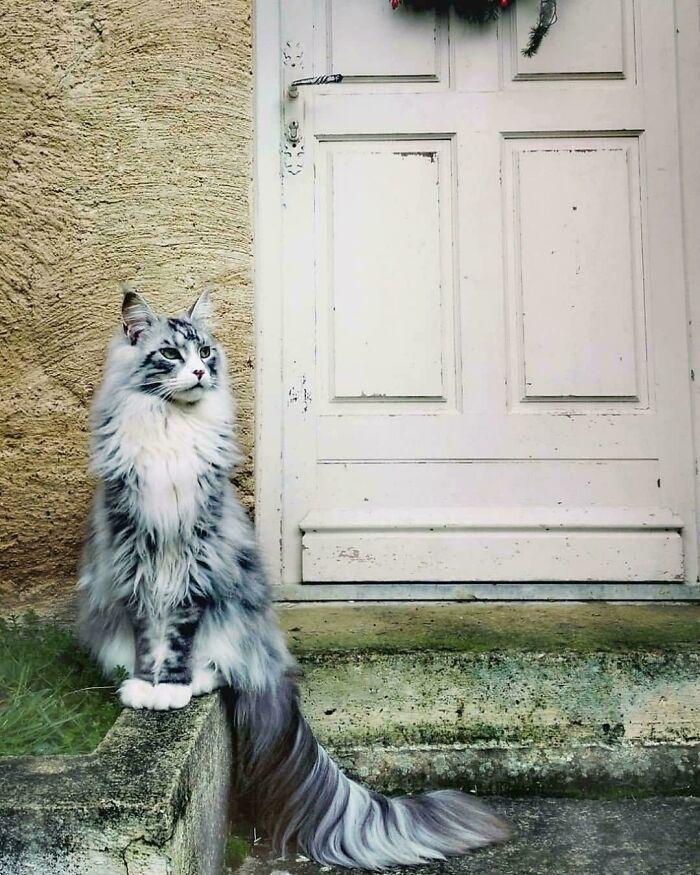 34 fotos de gatos supermodelos que certamente sabem fazer uma pose 5