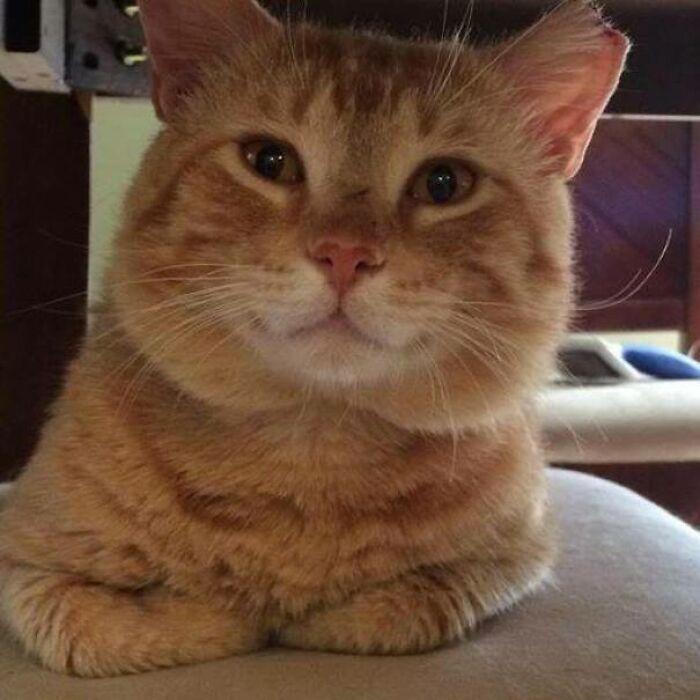 34 fotos de gatos supermodelos que certamente sabem fazer uma pose 7