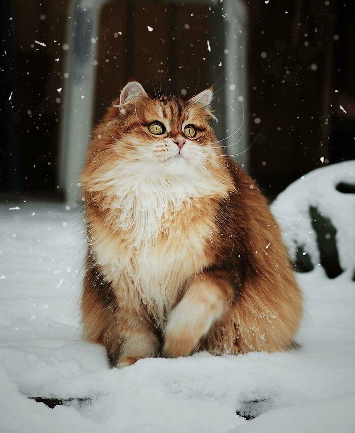 34 fotos de gatos supermodelos que certamente sabem fazer uma pose 8