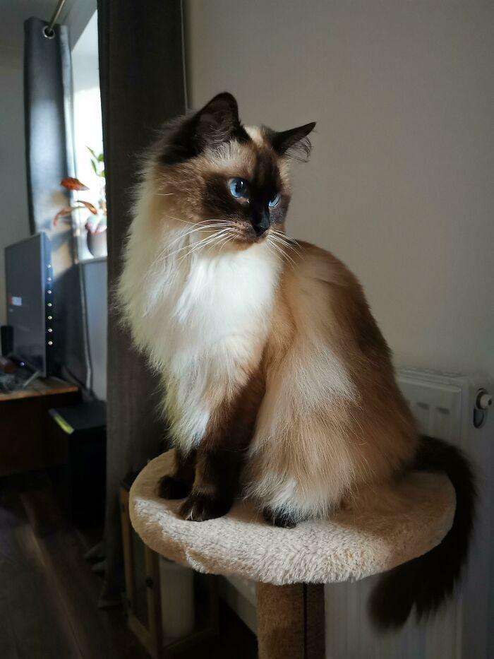 34 fotos de gatos supermodelos que certamente sabem fazer uma pose 15