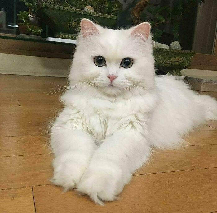 34 fotos de gatos supermodelos que certamente sabem fazer uma pose 16
