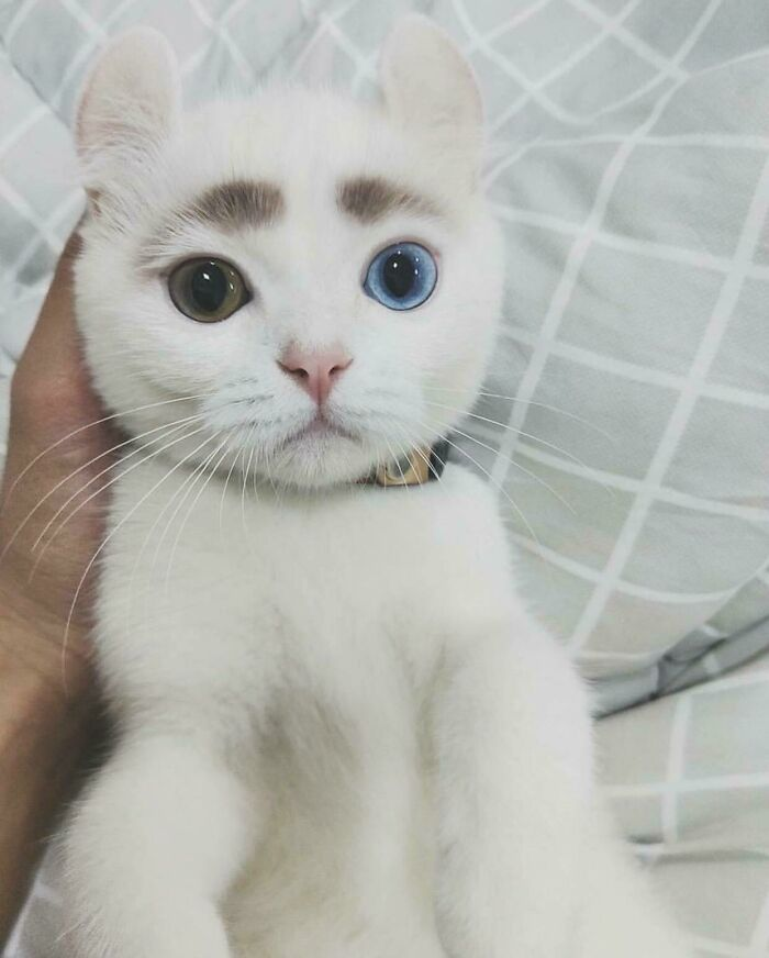 34 fotos de gatos supermodelos que certamente sabem fazer uma pose 17