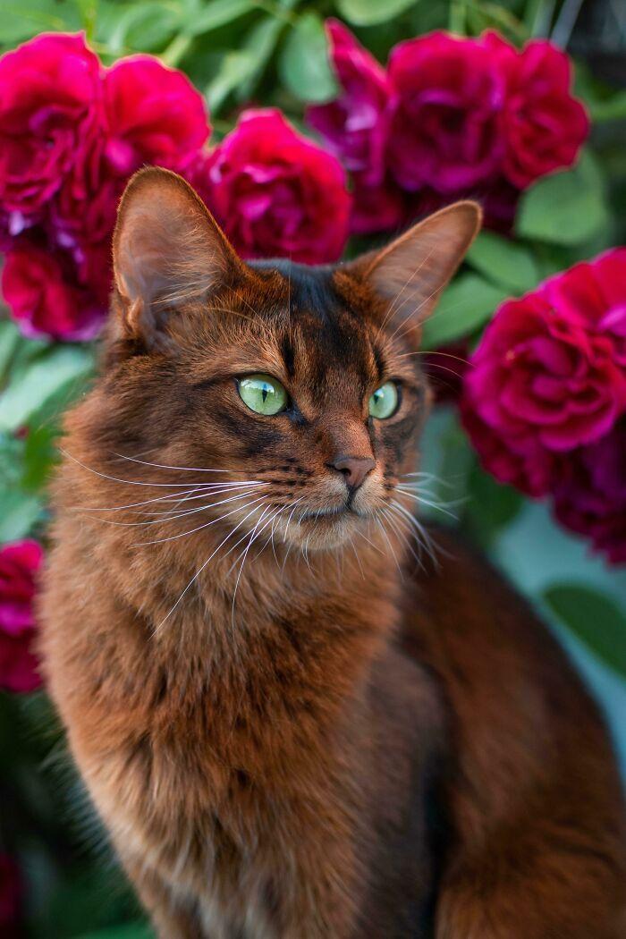 34 fotos de gatos supermodelos que certamente sabem fazer uma pose 18