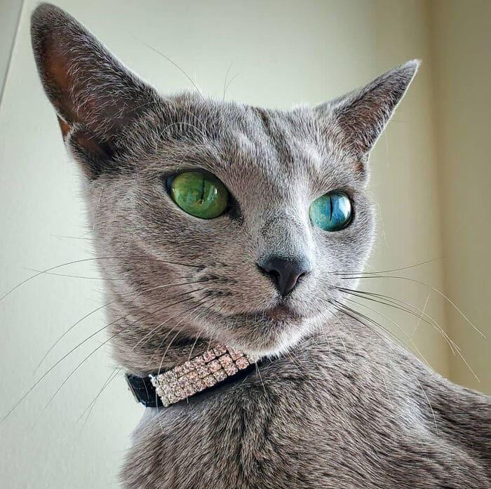 34 fotos de gatos supermodelos que certamente sabem fazer uma pose 20