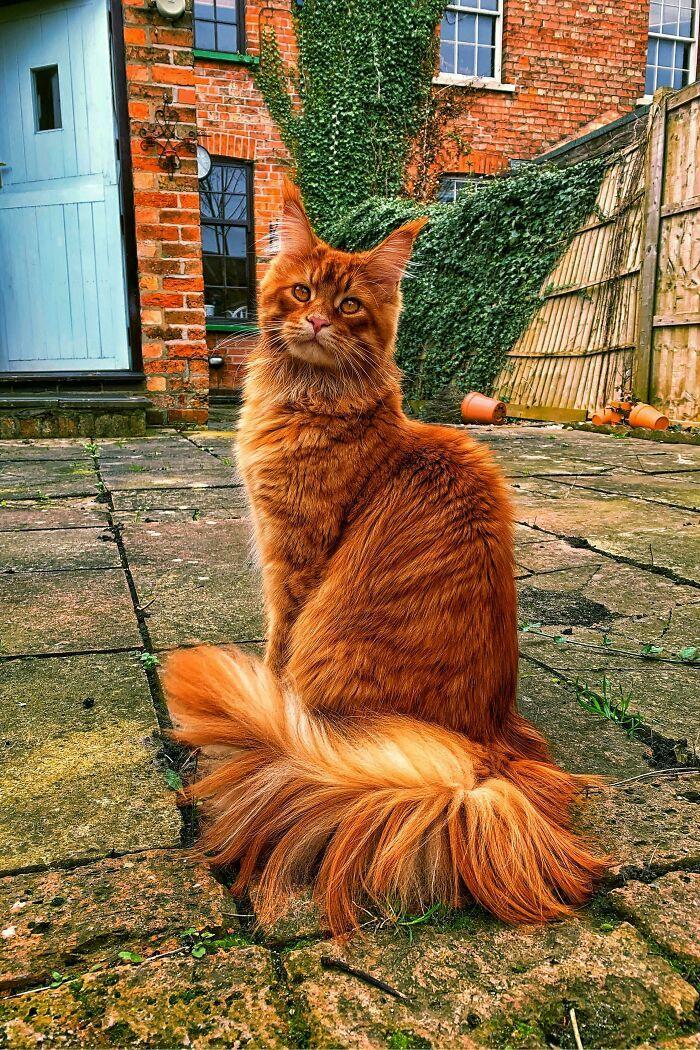 34 fotos de gatos supermodelos que certamente sabem fazer uma pose 21
