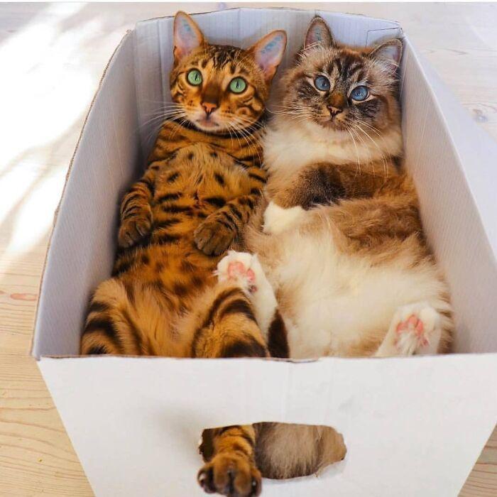 34 fotos de gatos supermodelos que certamente sabem fazer uma pose 23