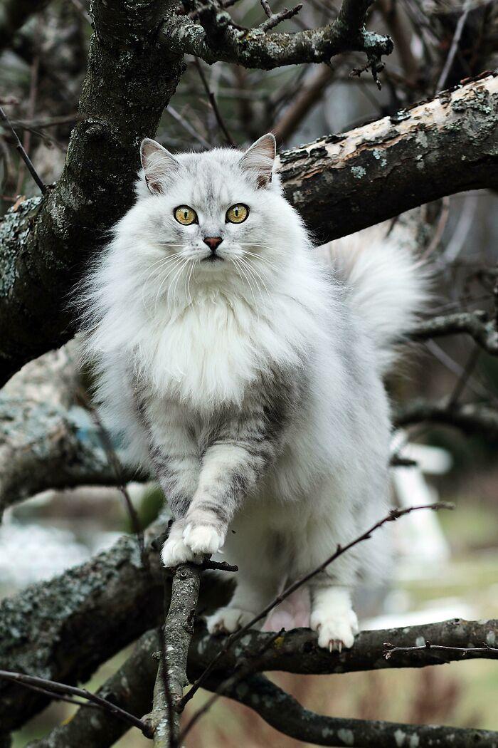 34 fotos de gatos supermodelos que certamente sabem fazer uma pose 25