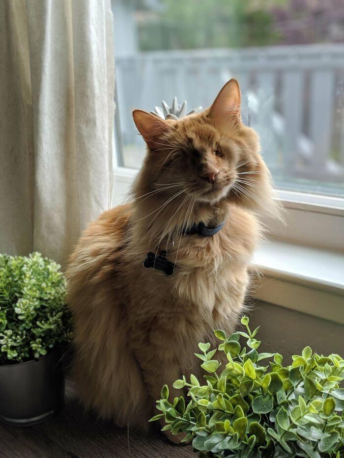 34 fotos de gatos supermodelos que certamente sabem fazer uma pose 26