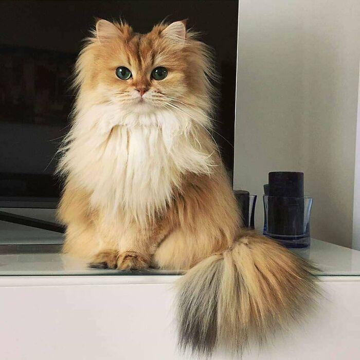 34 fotos de gatos supermodelos que certamente sabem fazer uma pose 27
