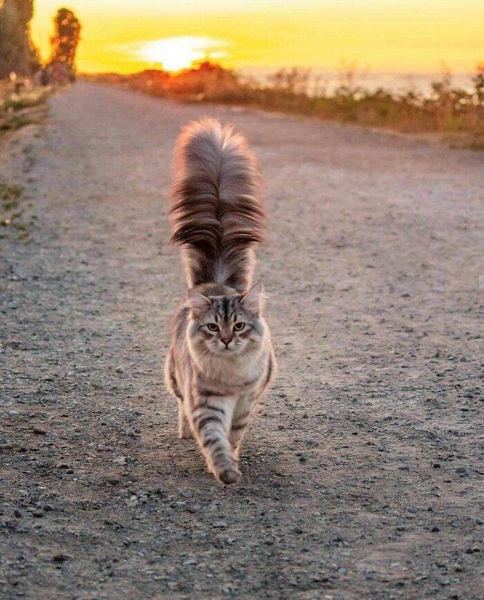 34 fotos de gatos supermodelos que certamente sabem fazer uma pose 29