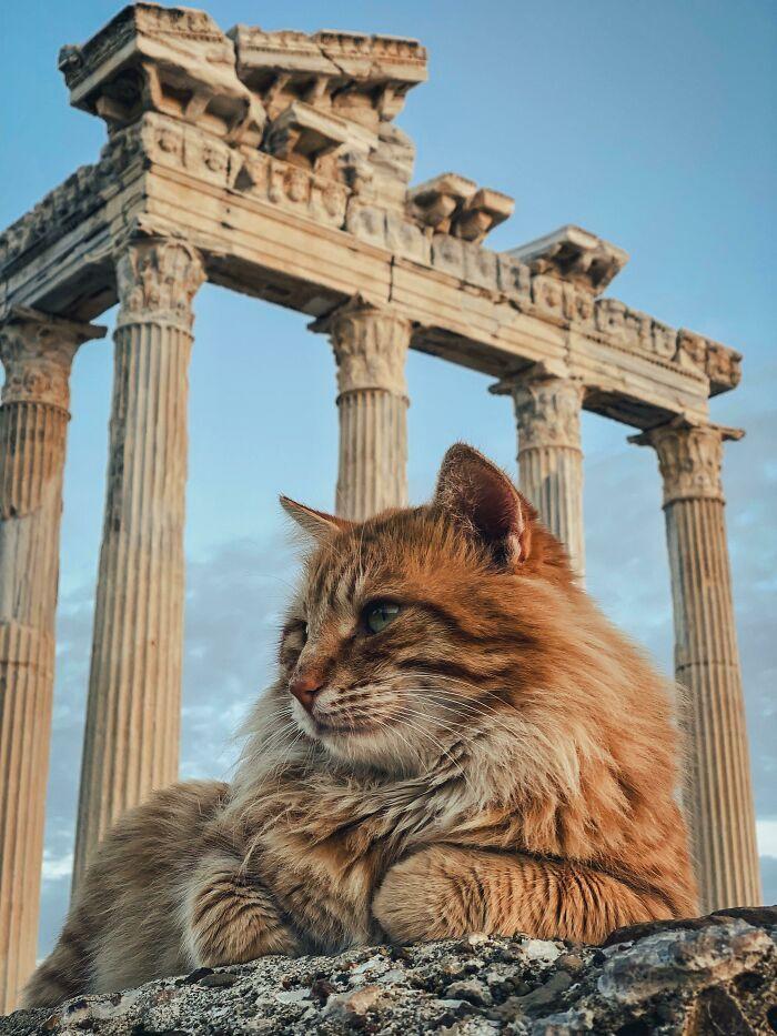 34 fotos de gatos supermodelos que certamente sabem fazer uma pose 31