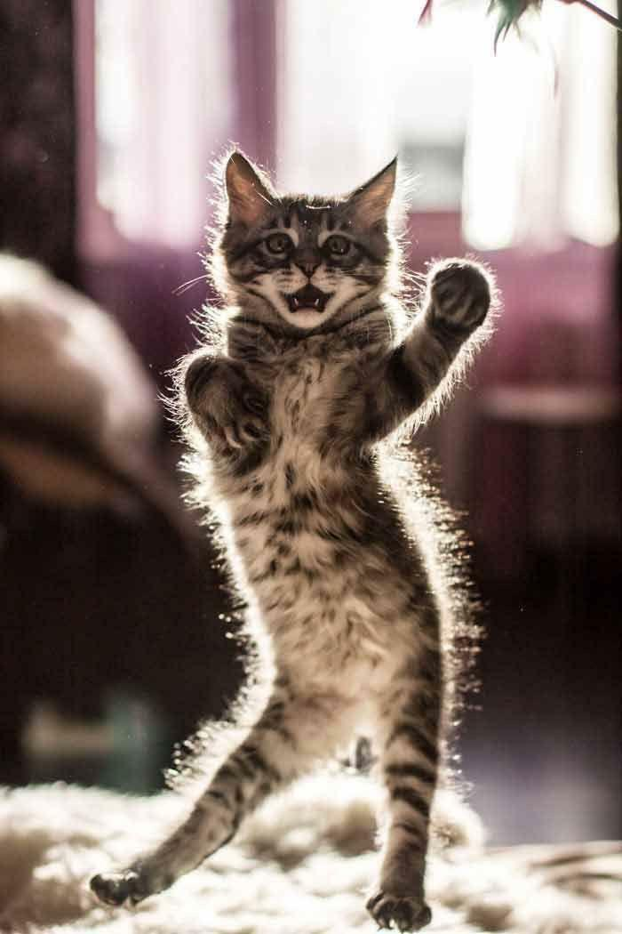 34 fotos de gatos supermodelos que certamente sabem fazer uma pose 32
