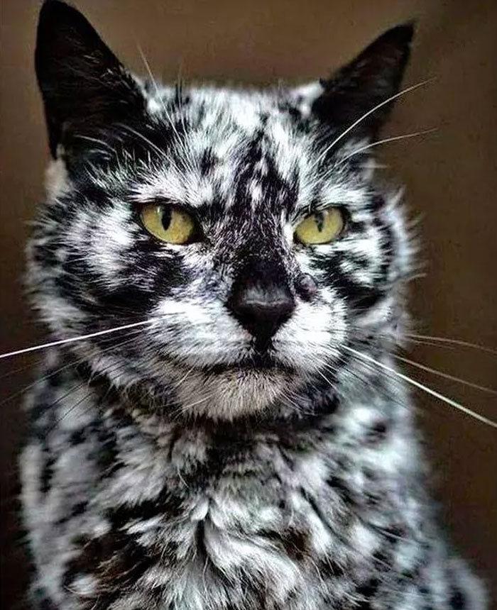 34 fotos de gatos supermodelos que certamente sabem fazer uma pose 33