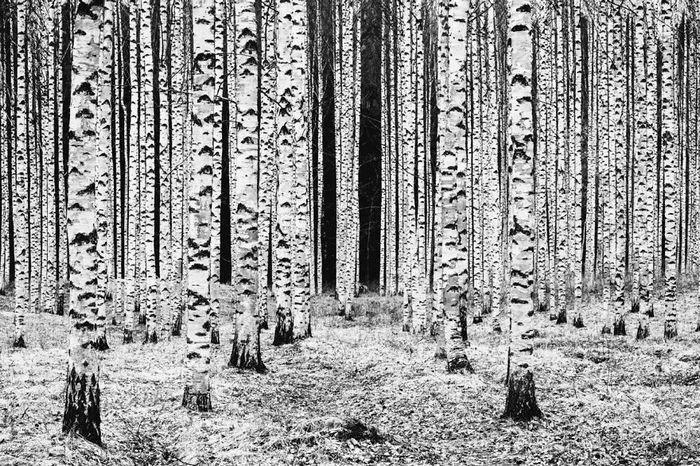 35 fotos incríveis e vencedoras do fotógrafo de natureza do ano de 2020 6