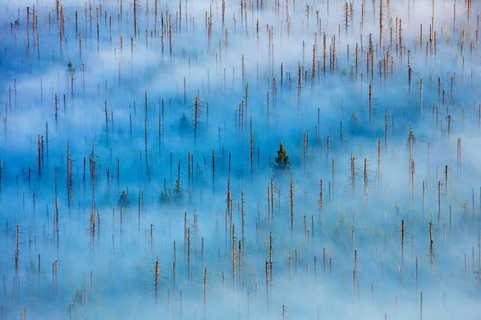 35 fotos incríveis e vencedoras do fotógrafo de natureza do ano de 2020 14