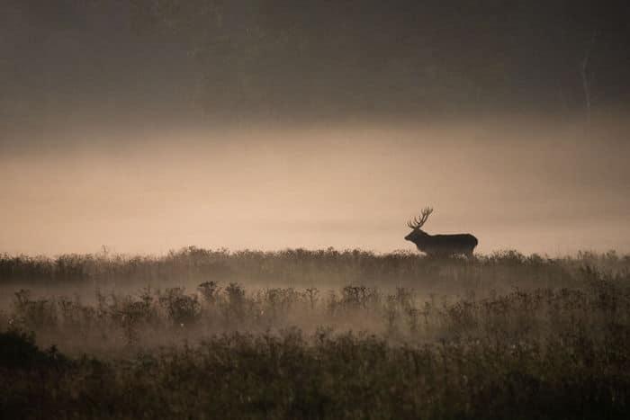 35 fotos incríveis e vencedoras do fotógrafo de natureza do ano de 2020 25