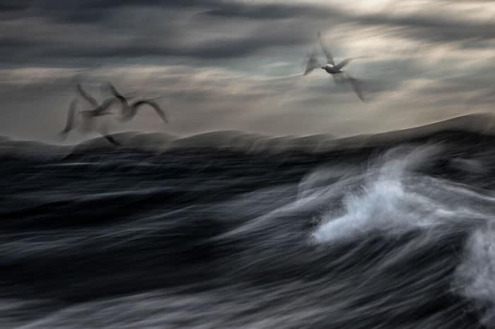 35 fotos incríveis e vencedoras do fotógrafo de natureza do ano de 2020 31