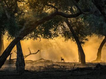 35 fotos incríveis e vencedoras do fotógrafo de natureza do ano de 2020 46