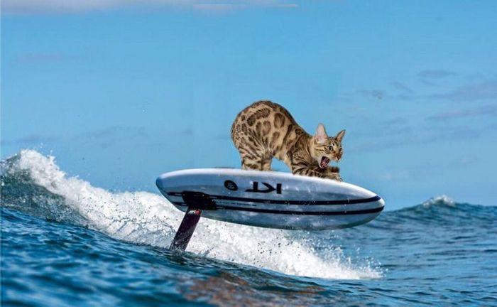 Mestres do Photoshop fazem imagens engraçadas ficarem ainda mais hilárias 10