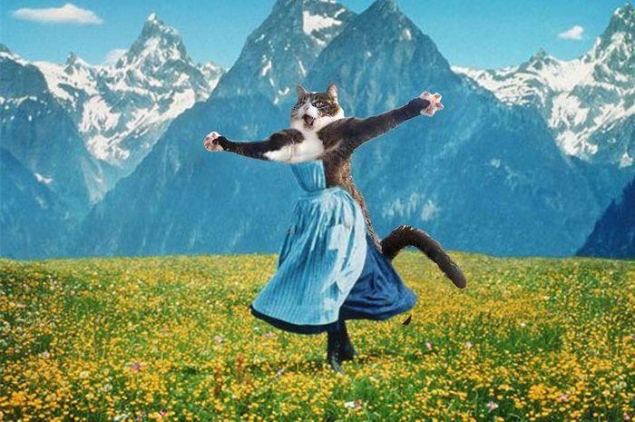 Mestres do Photoshop fazem imagens engraçadas ficarem ainda mais hilárias 14