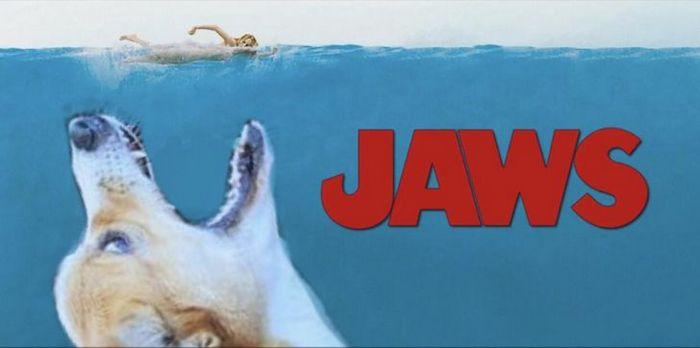 Mestres do Photoshop fazem imagens engraçadas ficarem ainda mais hilárias 24