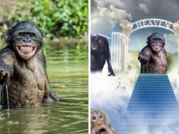Mestres do Photoshop fazem imagens engraçadas ficarem ainda mais hilárias 4