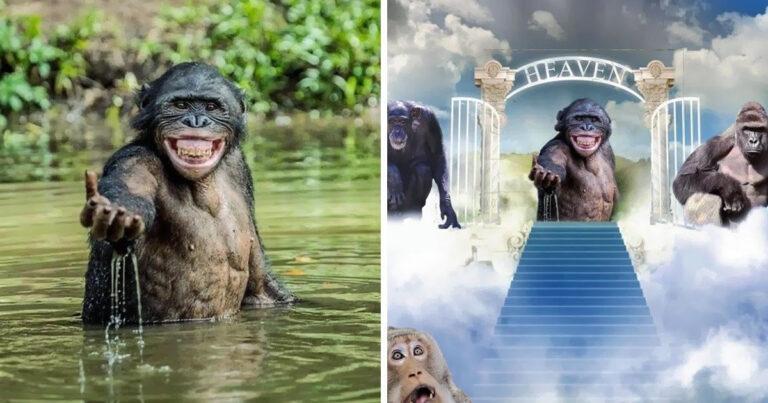 Mestres do Photoshop fazem imagens engraçadas ficarem ainda mais hilárias 1