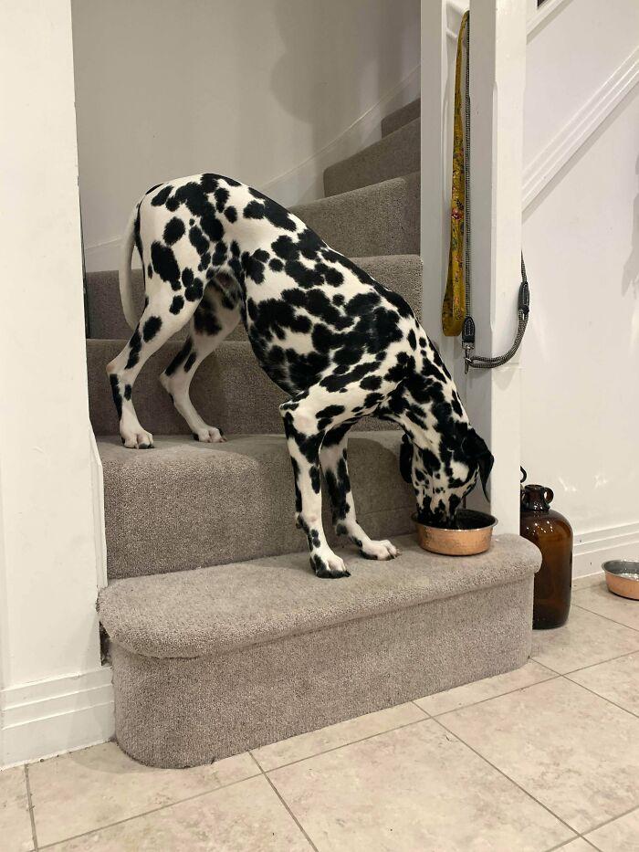 O que há de errado com seu cachorro? As pessoas estão postando fotos de cães com problemas e são hilários 7