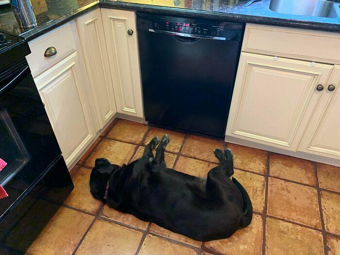 O que há de errado com seu cachorro? As pessoas estão postando fotos de cães com problemas e são hilários 8