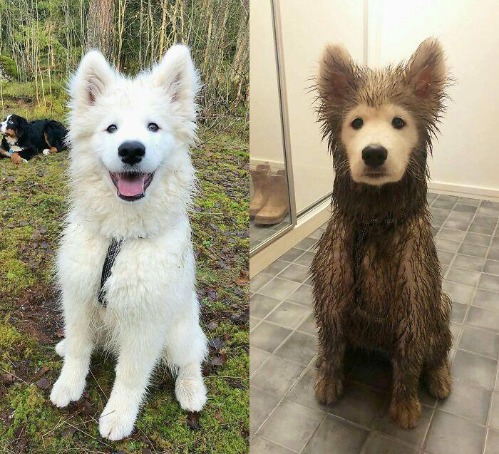 O que há de errado com seu cachorro? As pessoas estão postando fotos de cães com problemas e são hilários 12