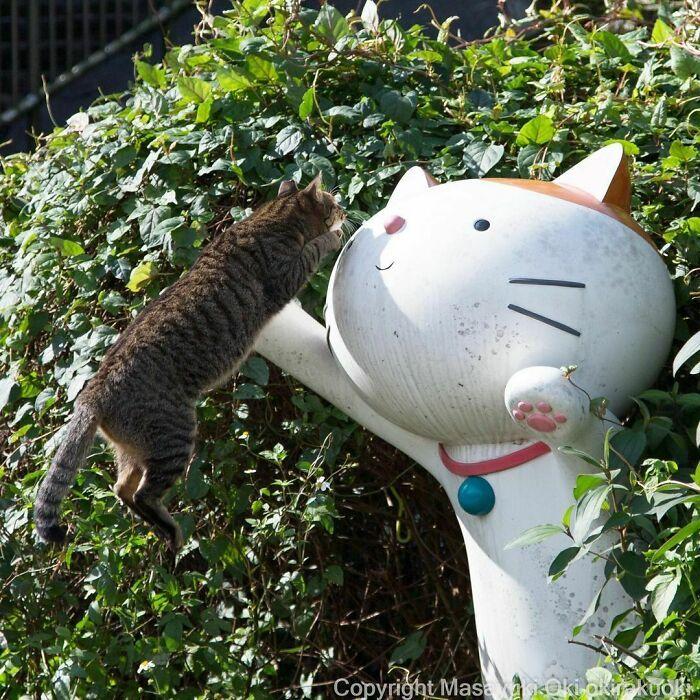 40 personalidades únicas de gatos de rua capturadas por este fotógrafo japonês 2