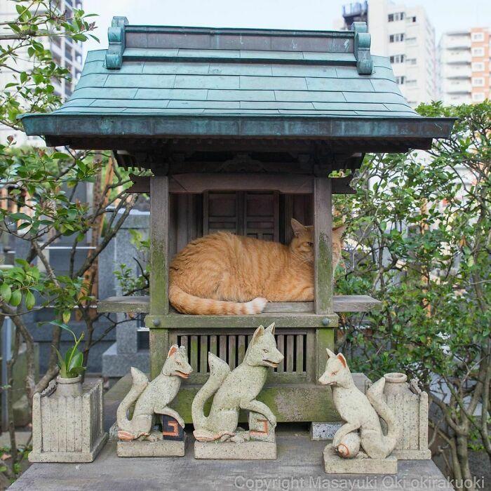 40 personalidades únicas de gatos de rua capturadas por este fotógrafo japonês 4