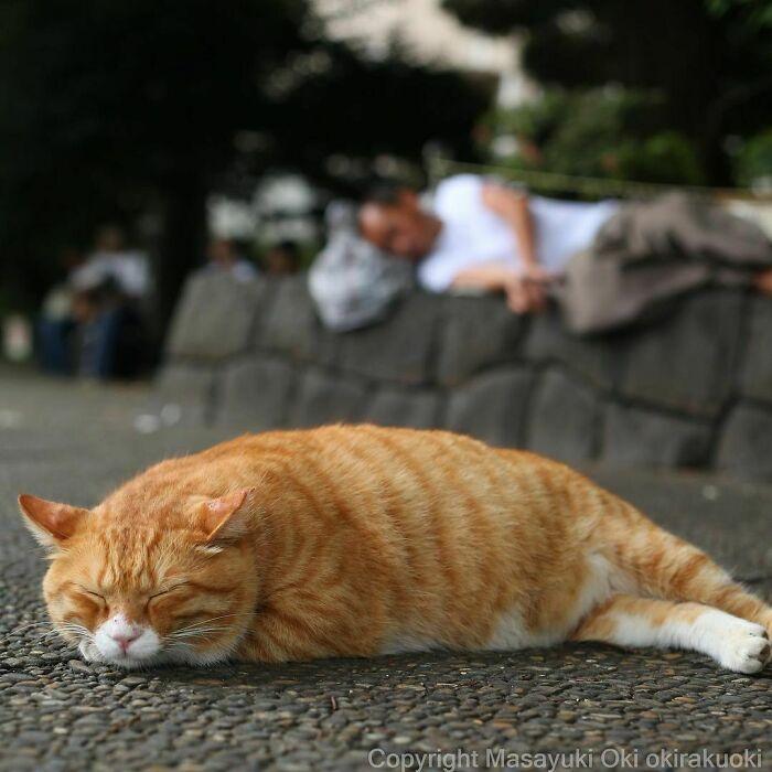 40 personalidades únicas de gatos de rua capturadas por este fotógrafo japonês 6