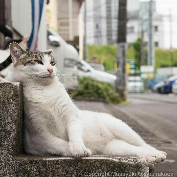 40 personalidades únicas de gatos de rua capturadas por este fotógrafo japonês 8