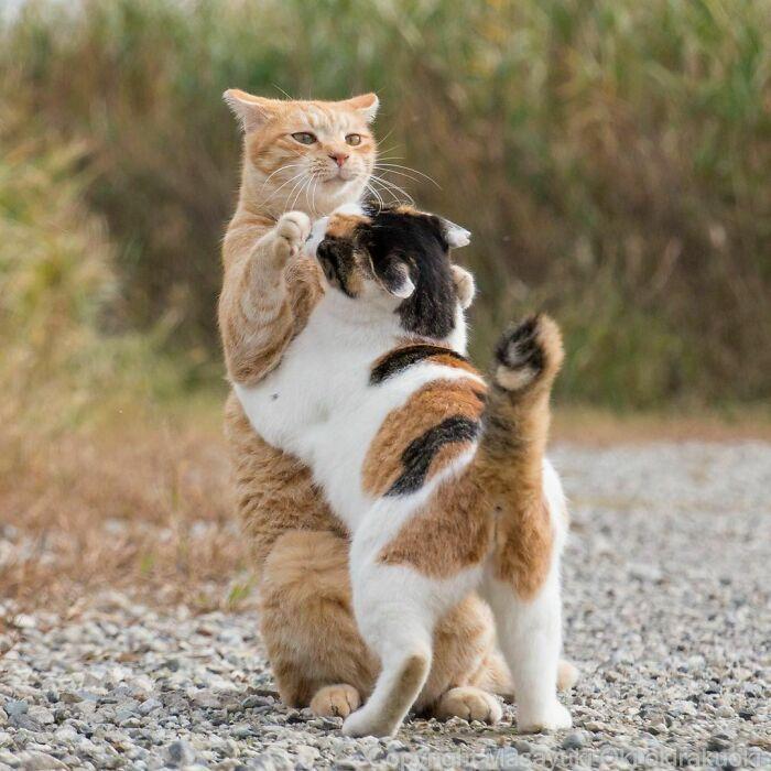 40 personalidades únicas de gatos de rua capturadas por este fotógrafo japonês 9