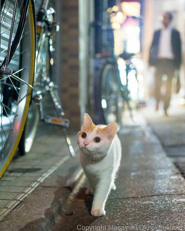 40 personalidades únicas de gatos de rua capturadas por este fotógrafo japonês 12